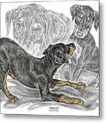 Puppy Love - Doberman Pinscher Pup - Color Tinted Metal Print