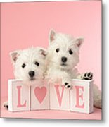 Puppy Love Metal Print by Greg Cuddiford
