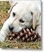 Puppy With Pine Cone Metal Print