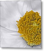 Pure And A Heart Of Gold Metal Print