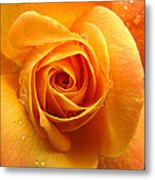 Pure Gold - Roses From The Garden Metal Print