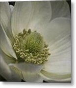 Pureness In White Metal Print
