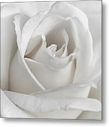 Purity Of A White Rose Flower Metal Print