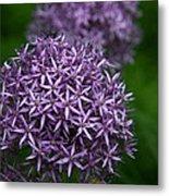 Purple Allium Metal Print