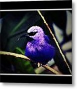 Purple And Blue Robin Metal Print