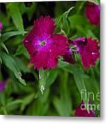 Purple And Red Metal Print