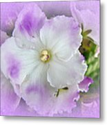 Purple And White Fancy African Violets Metal Print