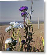 Purple And White Flowers In The Sun Metal Print