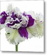 Purple And White Frilly Petunia Metal Print