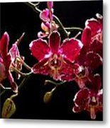 Purple And White Orchid Metal Print