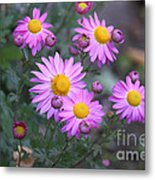 Purple Asters Metal Print