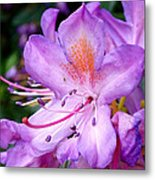 Purple Azalea Metal Print