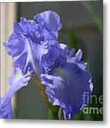 Purple Beauty Iris Metal Print