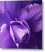 Purple Begonia Flower Metal Print