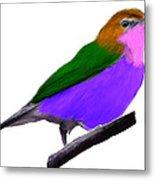 Purple Belly Warbler Metal Print
