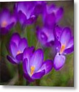 Purple Blanket Metal Print