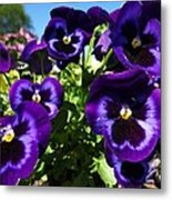 Purple Blooms Metal Print