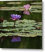 Purple Blossoms Floating Metal Print