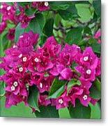 Purple Bougainvillea Metal Print