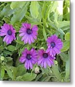 Purple By The Sea Metal Print