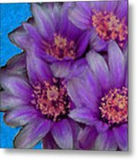 Purple Cactus Flowers Metal Print