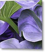 Purple Calla Lily Bush Metal Print