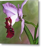 Purple Cattleya Orchid In Profile Metal Print