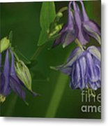 Purple Columbine Metal Print