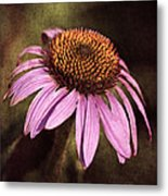 Purple Cone Flower II Metal Print