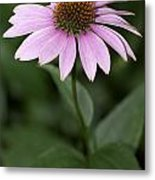 Purple Cone Flower Metal Print