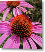 Purple Cone Flower With Bee Metal Print