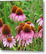 Purple Cone Flowers Metal Print