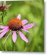 Purple Coneflower 8732 Metal Print