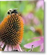 Purple Coneflower And Guest Metal Print
