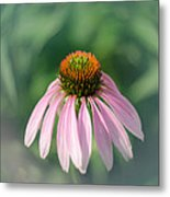 Purple Coneflower Metal Print