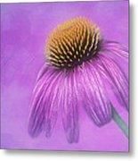 Purple Coneflower - Echinacea Purpura Metal Print