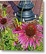 Purple Coneflowers By Former Railroad Depot In Pipestone-minnesota Metal Print