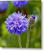 Purple Cornflower Metal Print