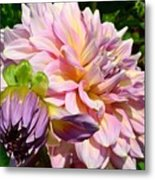 Purple Dahlia With Bud Metal Print