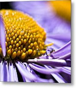 Purple Drop Metal Print