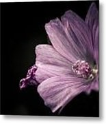 Purple Flower Surrounded With Black Metal Print