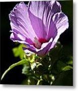 Purple Flower With Dark Background Metal Print