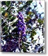 Purple Flowering Tree Metal Print