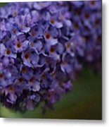 Purple Flowers 1 Metal Print