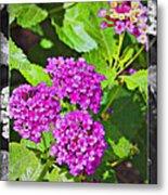 Purple Flowers A Metal Print