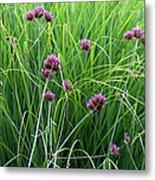Purple Flowers And Grasses Metal Print
