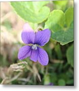 Purple Garden Flower Metal Print