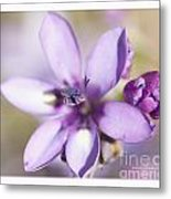 Purple Geranium 2 Metal Print by Artist and Photographer Laura Wrede