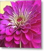 Purple Giant Zinnia Metal Print