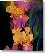 Purple Gold Irises  Metal Print